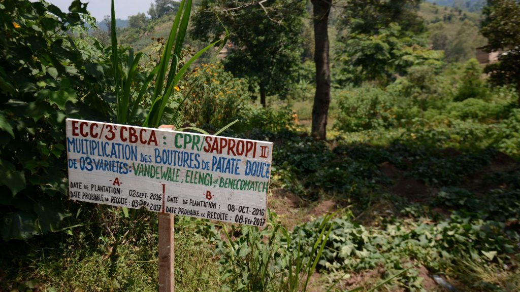 CPR entwickelt außerdem mehrere Sorten von resistenten Pflanzen, die die Lebensmittelversorgung der Bevölkerung sicherstellen soll.