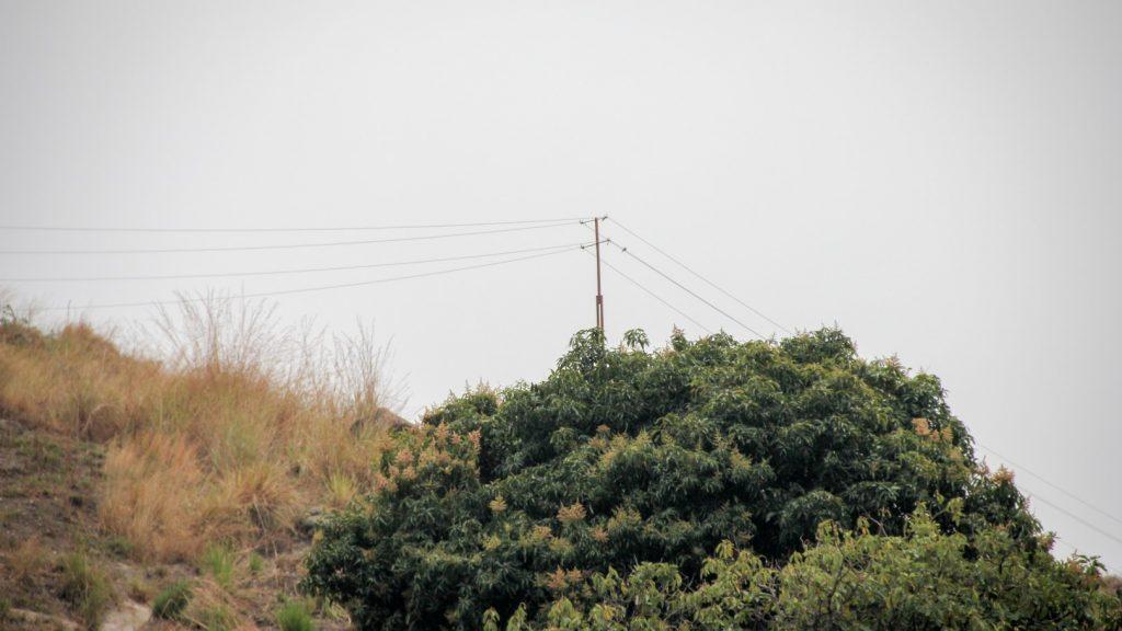 Aufgrund des hohen Spannungsabfalls auf der rund einen Kilometer langen bestehenden Niederspannungs-Trasse kann der produzierte Strom momentan nicht industriell genutzt werden - eine Mittelspannungs-Freileitung löst dieses Problem.
