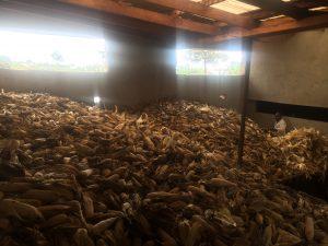 Hier lagern die Maiserträge der Bauern der Region