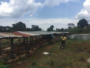 Eine Schweine Farm im Hinterland der Ssama School und Teil von Nayofa