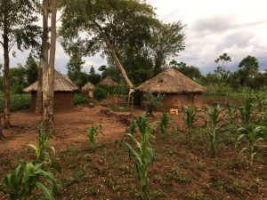 Landleben in Uganda