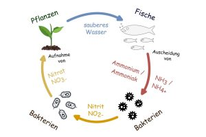 Kreislaufsystem einer Aquaponikanlage