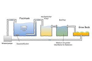 Prinzip einer Aquaponikanlage