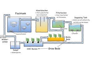 Ausführliche Darstellung des Prinzips einer Aquaponikanlage