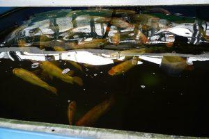 Besuch Aquaponicsanlagen Schweiz